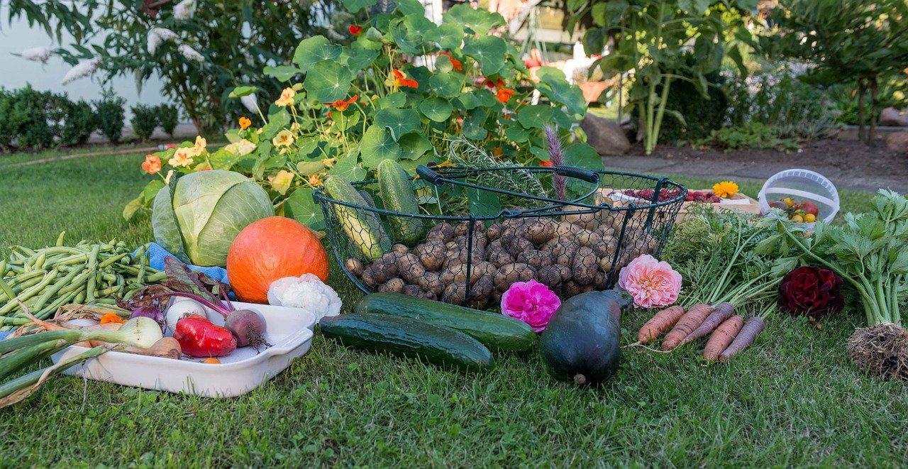 Quels légumes choisir pour son potager?