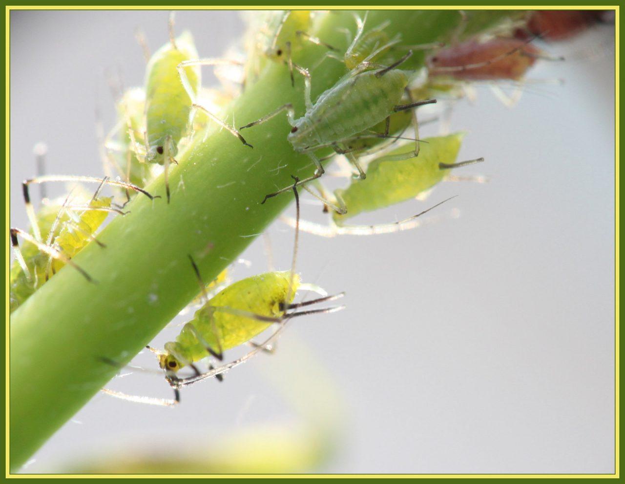 Parlons des insectes nuisibles dans votre jardin