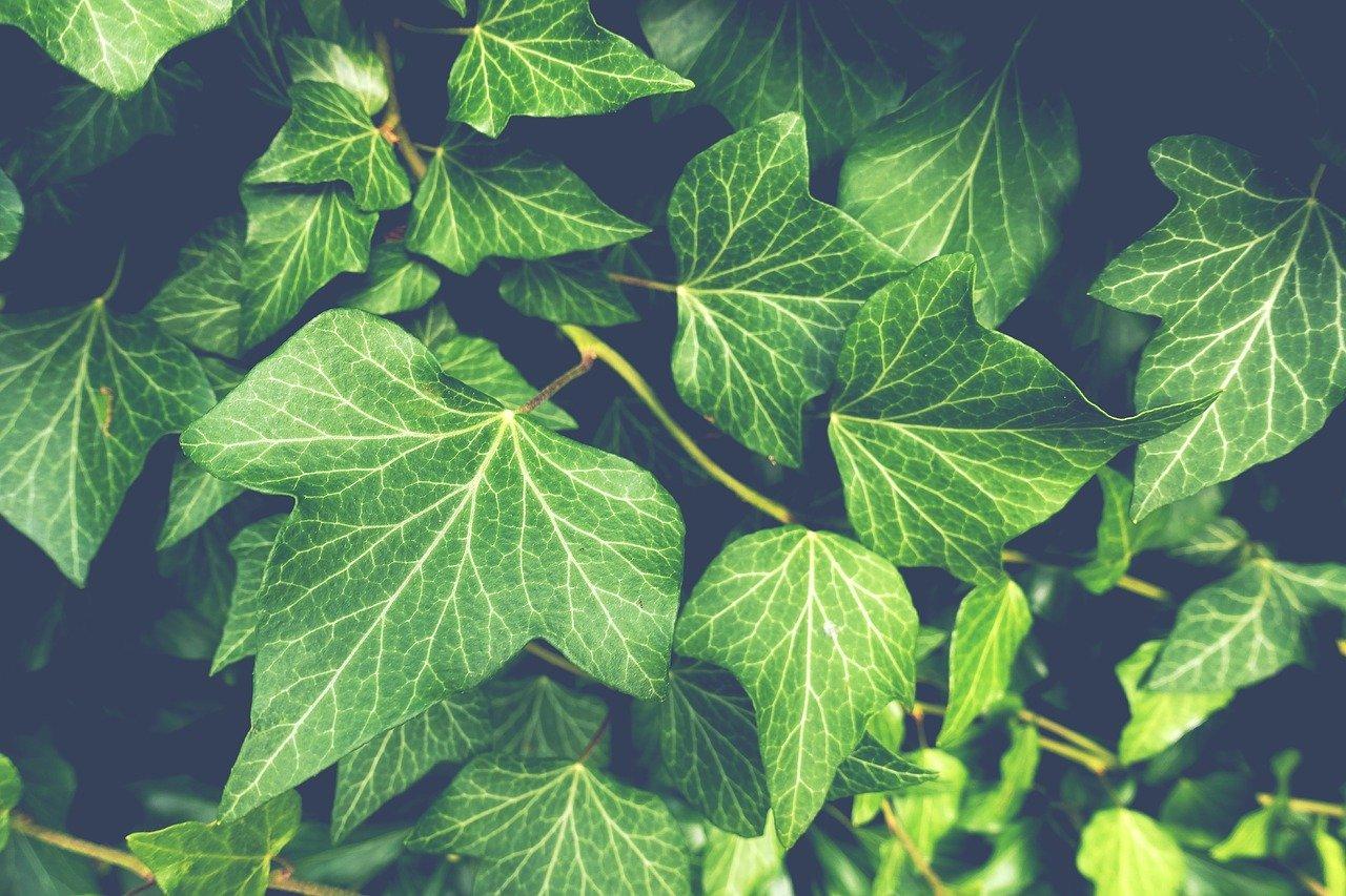 Comment réussir à arroser les plantes de façon économique et régulière?