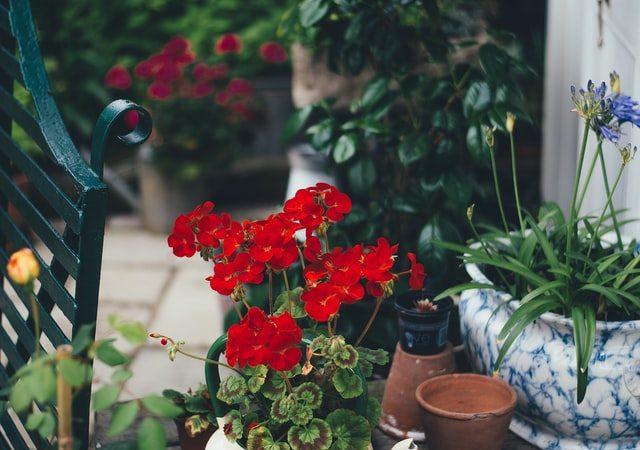 Des plantes et fleurs sur la terrasse : une alternative pour avoir un espace vert en centre-ville