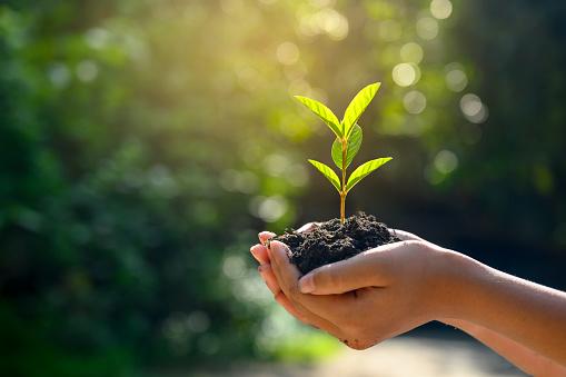 Les conseils de Pascaline pour la décoration de votre jardin